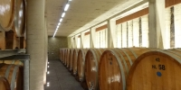 Ageing Cellar Produttori del Barbaresco