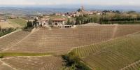 Serralunga Barolo vineyards